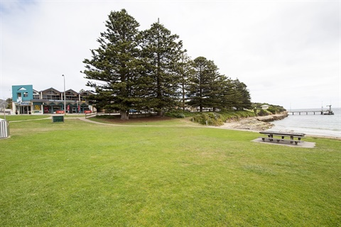 Port Campbell foreshore pines.jpg