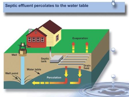 Septic-Effluent-Percolates-to-the-water-table.jpg